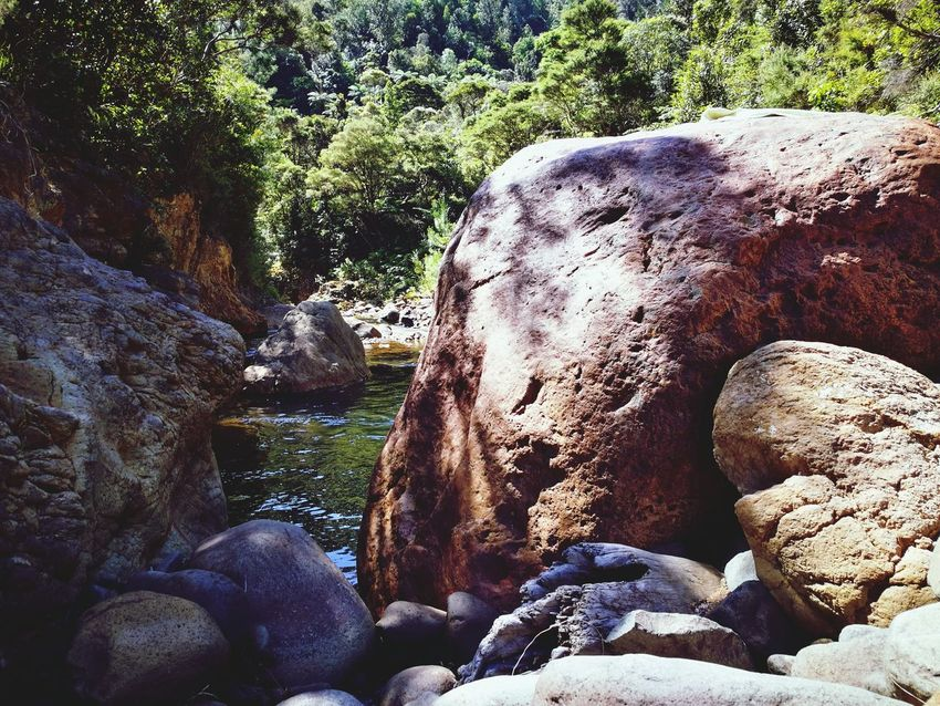 Sunlight Real People Nature Tree Day Close-up Outdoors Beauty In Nature Rock Bolder BIG Green Swim Summer