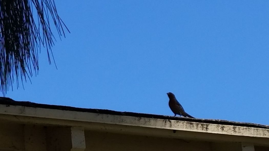 Natural Light No Edit Walking My Streets Bird Still Life Photography Meditation EyeEm Best Shots Beauty In Nature Bird Themes Bird On Roof Outdoors Clear Sky No People Perching Sunlight Simple Minimalism Sky_ Collection Shadow And Light Street Photography Fine Art Photgraphy Copy Space