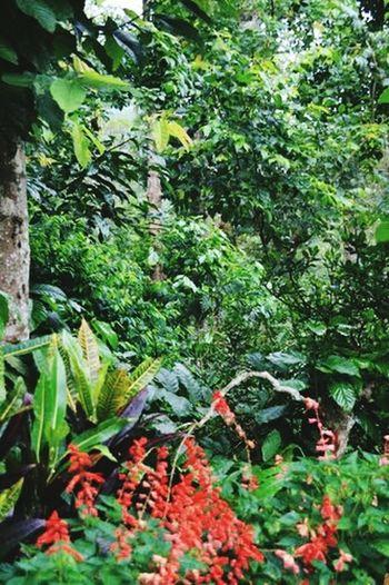 Coffee Plantations Westren Ghats  Karnataka India