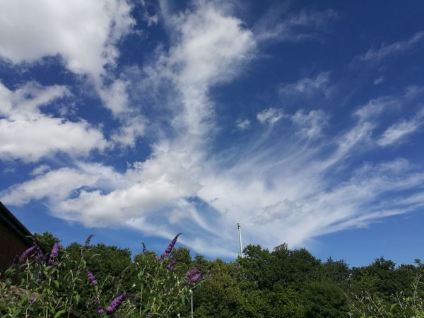 Sky And Clouds Sky Clouds Taken With The Huawei P9 Nature Sky And Trees Sky And Flowers