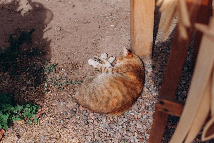 High angle view of cat sleeping