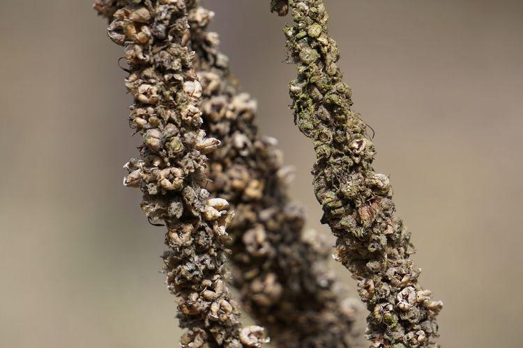 Detail shot of plants against blurred background