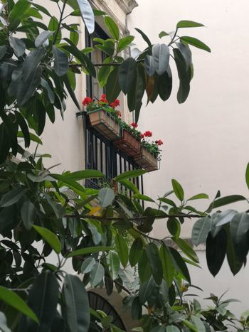 Corti Lecce Salento Italy🇮🇹 Tree Bird Leaf Palm Tree Greenhouse Close-up Plant
