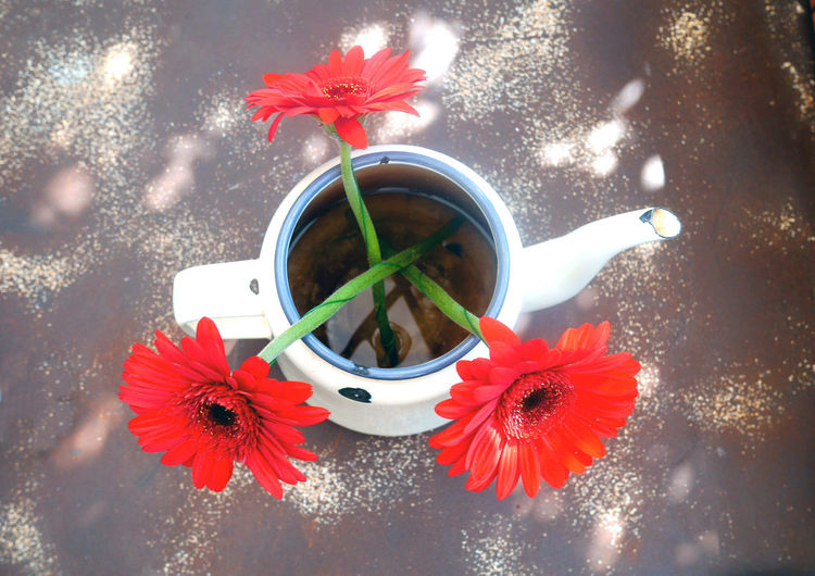 Cafe Cafe Table Flower Flower Head Flowers In A Teapot Freshness Old Teapot Petal Quai Red Red Flower Tea Time Teapot White Teapot