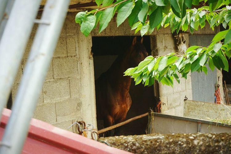 Horse Caballo Caballos 🐎🐎👢 Beautiful Eye Clear Nature Animal Spanish Horse