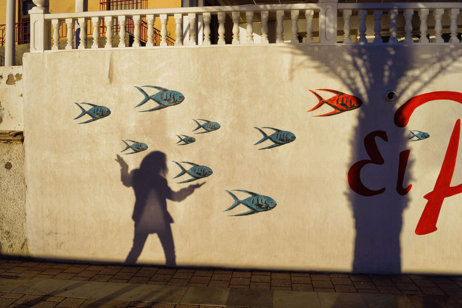 Silhouette of a woman shadow on a wall with fishes and palm tree outside on the street Canon_photos Challenge Fish Fishes Happy Live For The Story Liveforthestory Outside Palm Tree Palm Trees Posing Shade Shadow Silhouette Story Streetphotography Summer Summertime Text Tree Wall Wall Art Woman