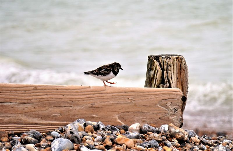 Bird perching on wooden post at shore