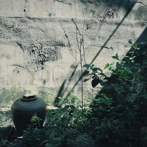 High angle view of plants on wall