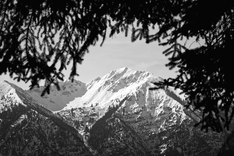 Mountains with natural frame Tree Mountain Winter Snow Cold Temperature Snowcapped Mountain Environment Mountain Range Pine Tree Mountains Blackandwhite Monochrome Frame Natural Frame Telephoto Bavaria Bayern Alps Alpen Woods Forest Fine Art Photography