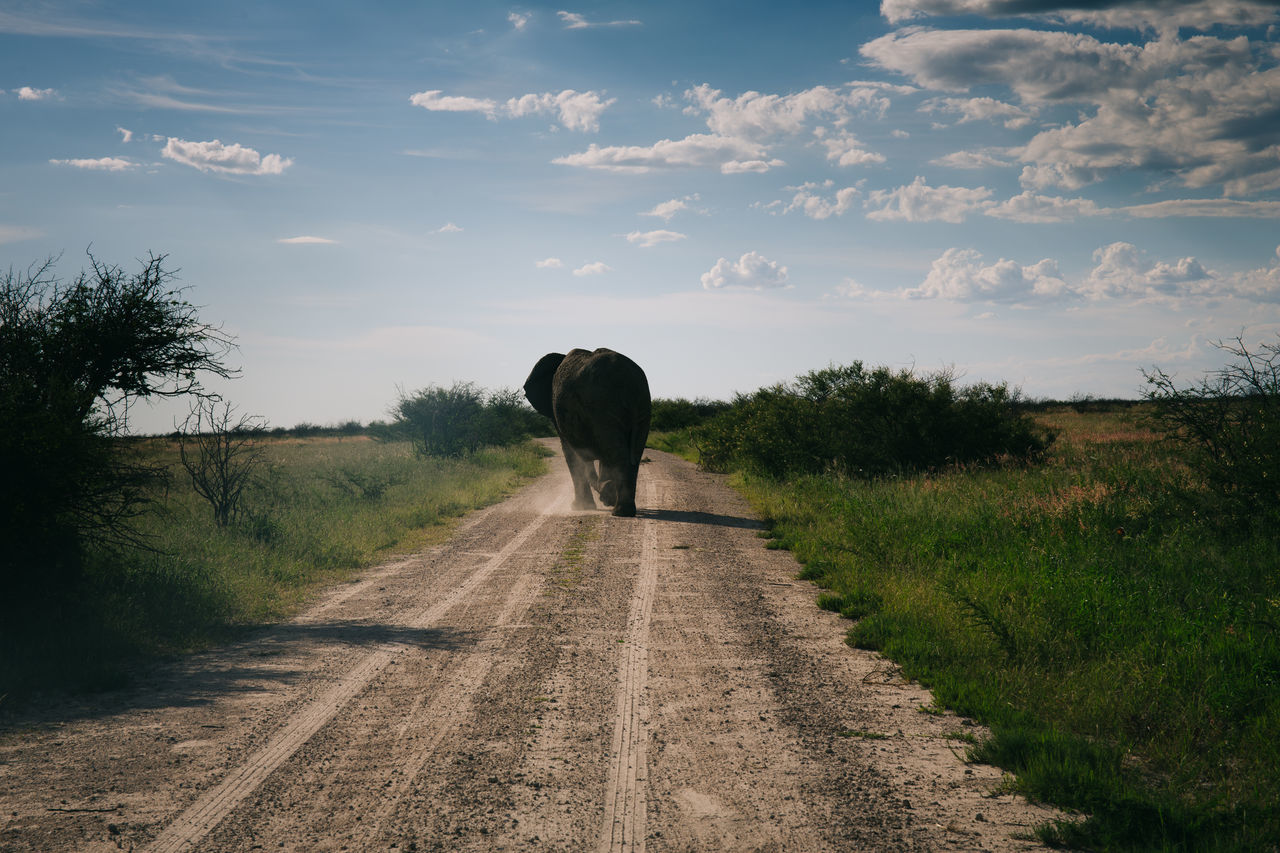 Rear view of elephant on dirt road amidst plants against sky