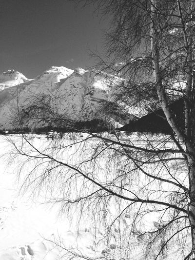 Black & White Monochrome IPhoneography Mountain View Snow Tree Winter Holyday Ski