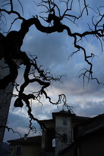 Low angle view of silhouette tree and building against sky