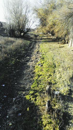Biutiful Nature Walking Around