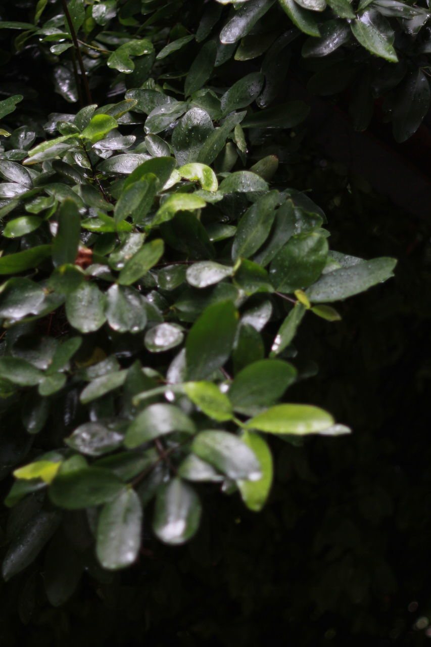 HIGH ANGLE VIEW OF RAINDROPS ON PLANT LEAVES
