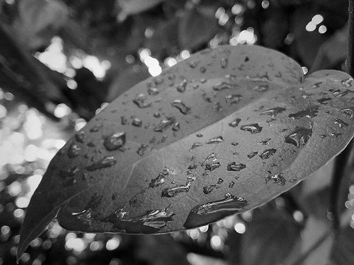 Daun Hideung... Opponesia Oppocamera Ofansphoto OPPO Oppography