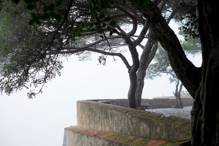 Edge of a Castle Wall in the fog Tree Plant Nature Tree Trunk Trunk Day Architecture No People Growth Built Structure Branch Sky Outdoors Beauty In Nature Tranquility Wall Tranquil Scene Foggy Morning Castle Walls Edge Serene