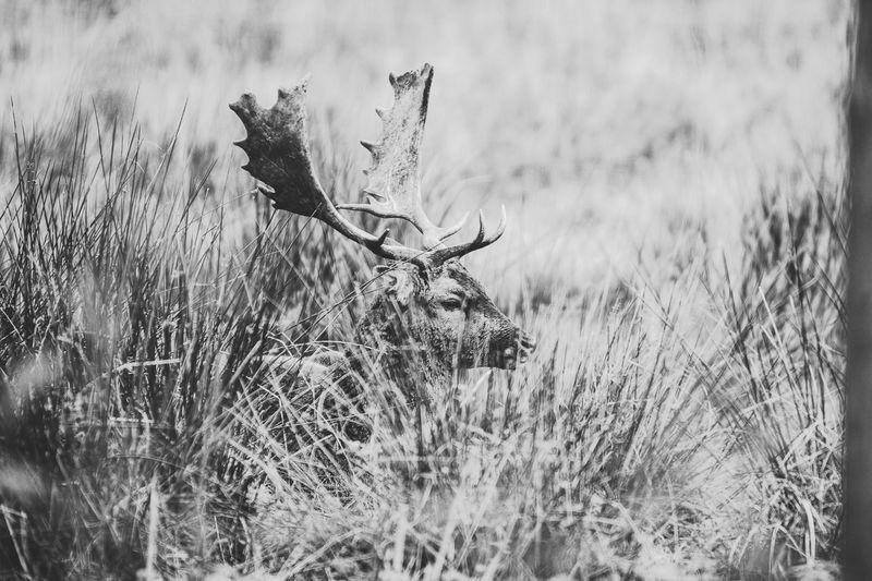 Deer Horns Hirsch Hirschgeweih Hirsche Grass Field Nature Plant Outdoors Beauty In Nature No People Day Nature Animal Wildlife