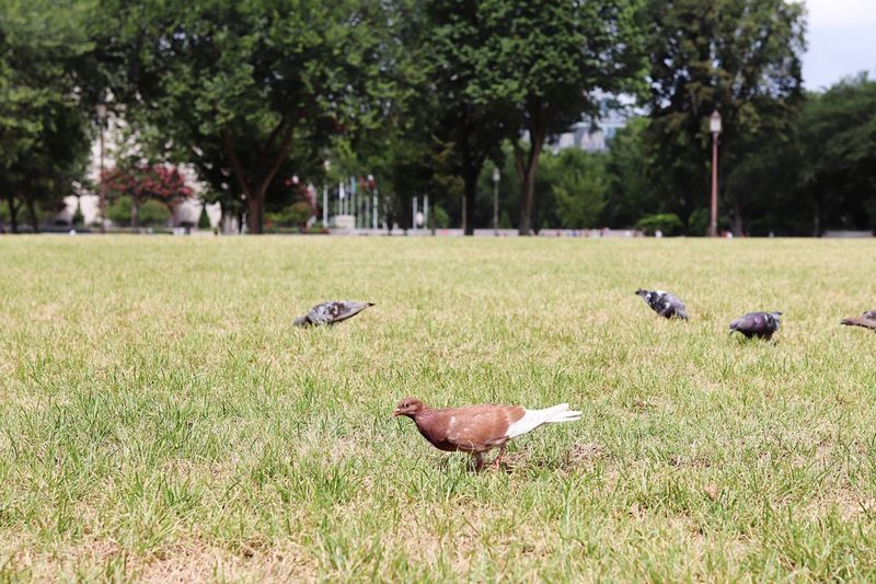 Pigeons of the city City Animals Washington, D. C. Pidgeons City Life Cityscape Plant Group Of Animals Grass Animal Animal Themes Bird Tree No People Animals In The Wild Nature Outdoors Vertebrate Green Color Sunlight Field Animal Wildlife Day Land Growth Park