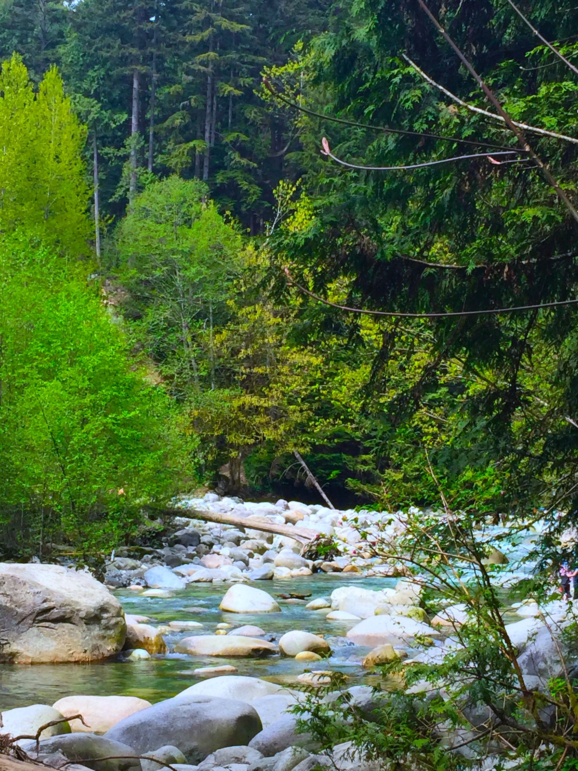 tree, water, growth, tranquility, green color, tranquil scene, plant, stream, nature, beauty in nature, forest, scenics, river, rock - object, lush foliage, branch, green, day, outdoors, lake