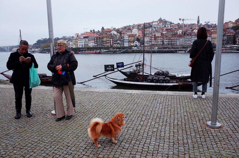 Dog standing on shore against sky