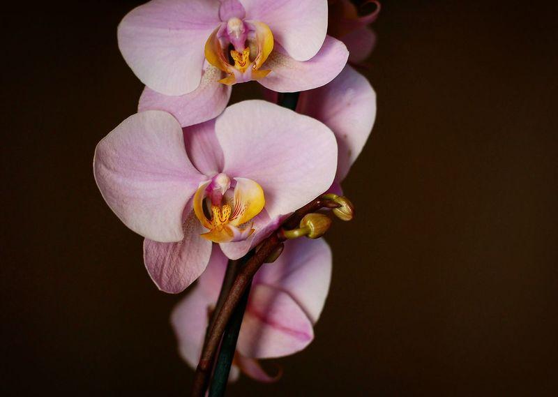 Orchid Flower Orquideas Flor Valencia, Spain Contrast Colour Of Life
