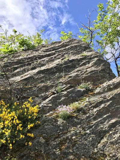 Low angle view of flowering plants by rocks against sky