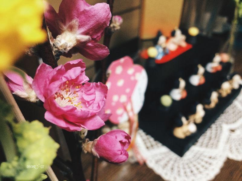 Peach Blossom Spring Flowers Spring Springtime Japan 桃の節句 ひなまつり 雛祭り 桃の花 Asian Culture