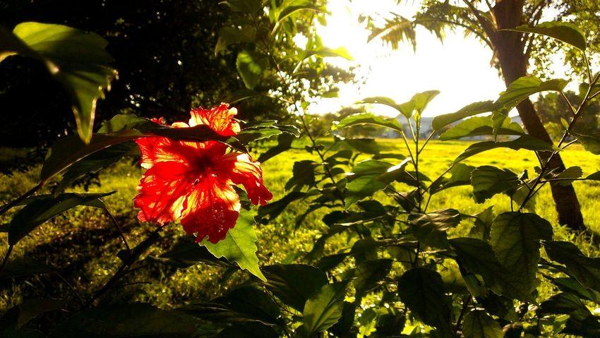 Red Flower Sunset Relaxing