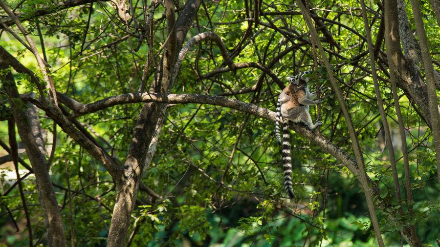 Tree Animal