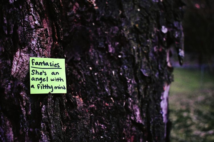 Photography Nature Outdoors Tree Bark Note Rhsin Whiskey Words And A Shovel