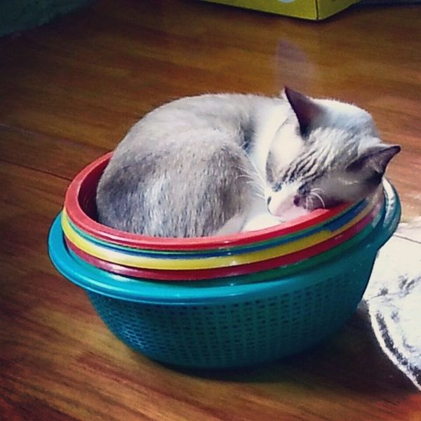 Wherever it fits, I'll sleep. Hikothecat ???