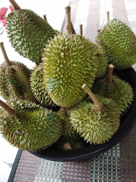 durians Durian King Of Fruit Fruits Prickly Pear Cactus Cactus Spiked Thorn Danger Close-up Plant Green Color