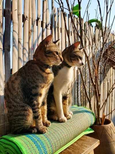 View of a cat sitting outdoors