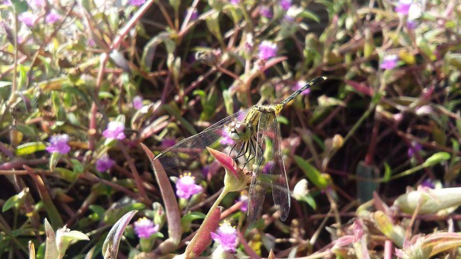 Dragon fly First Eyeem Photo