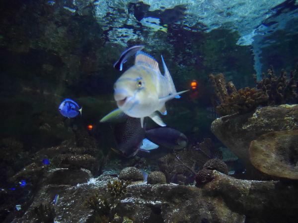 Poisson Poissons Poisson 🐟 Mer Ocean Aquarium Sealifeaquarium Grauduroi