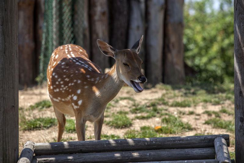 Spotted Deer At Songdo Central Park