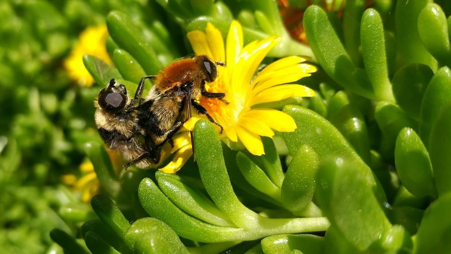Close-up of bee mating on flower