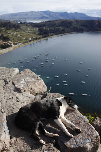 isla del sol, bolivia Titicaca Lake Lake Titcaca Bolivia Rock - Object Resting Solid Mountain Rock No People Domestic Animals Day Nature Pets Vertebrate Domestic Lake Relaxation Animal Mammal Water One Animal Animal Themes