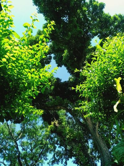 Garden Green Natural Beauty Fresh Green Leaves Tree Backgrounds Full Frame Close-up Sky Green Color
