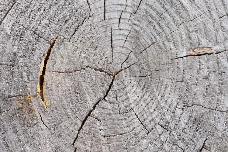 Beautiful Nature Tree Trunk Backgrounds Bark Beauty In Nature Close-up Concentric Cracked Cute Cuted Tree Day Dead Plant Forest Full Frame Grain Grey Macro Natural Pattern Nature No People Outdoors Pattern Plant Rings Rough Structure Textured  Textured Effect Tree Tree Ring Tree Stump Tree Trunk Trunk Wood - Material