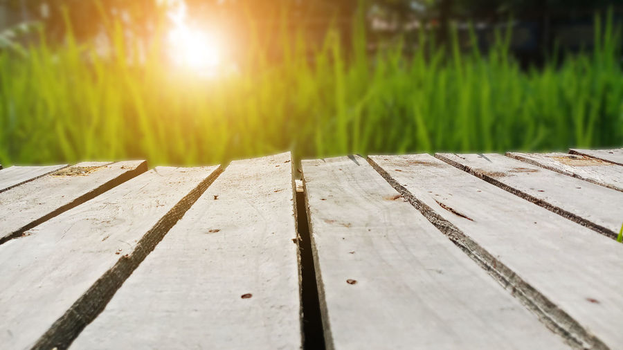 Plank wooden on field rice with sunset