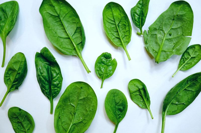 Spinach Green Color Freshness Vegetable Plant Part Leaf Food And Drink Food Healthy Eating Indoors  Directly Above High Angle View Still Life No People Wellbeing Nature Green White Background Choice Leaf Vegetable Leaves