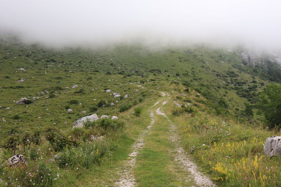 Beauty In Nature Day Direction Environment Fog Footpath Grass Green Color Krn Land Landscape Nature No People Non-urban Scene Outdoors Plant Scenics - Nature The Way Forward Trail Tranquil Scene Tranquility Travel Destinations