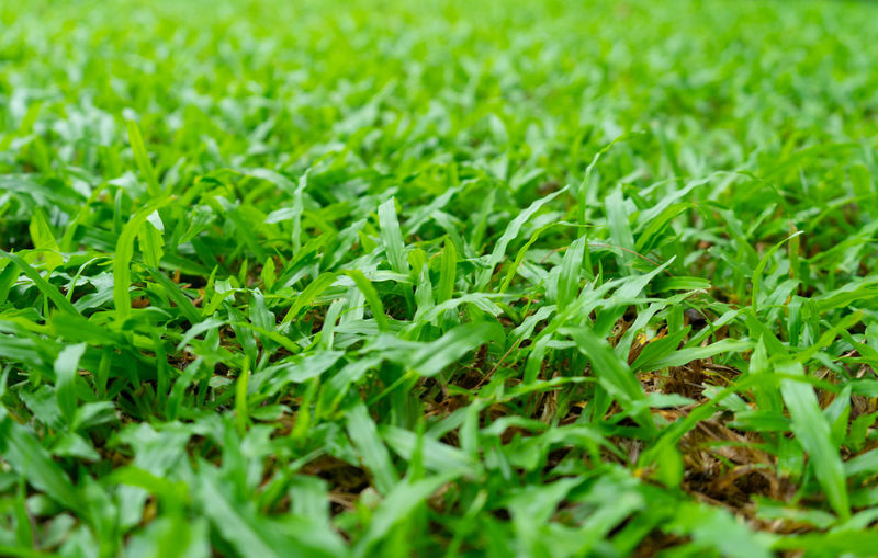 Close up grass teaf texture in garden as background. Green Color Plant Selective Focus Growth Field Land Grass Nature Beauty In Nature No People Close-up Backgrounds Full Frame Outdoors Day Plant Part Freshness Leaf Tranquility Lush Foliage Surface Level Blade Of Grass