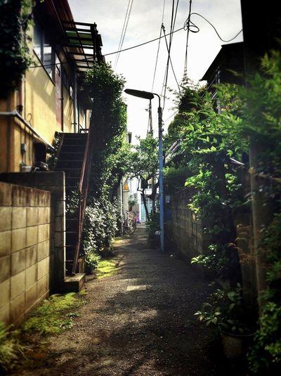 Tokyo Allay