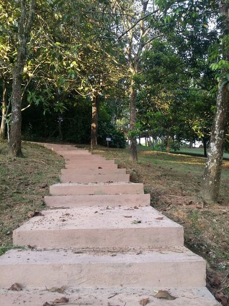 Tree No People Day Outdoors Nature Stairs In Nature Stairs Green Grass Green Trees