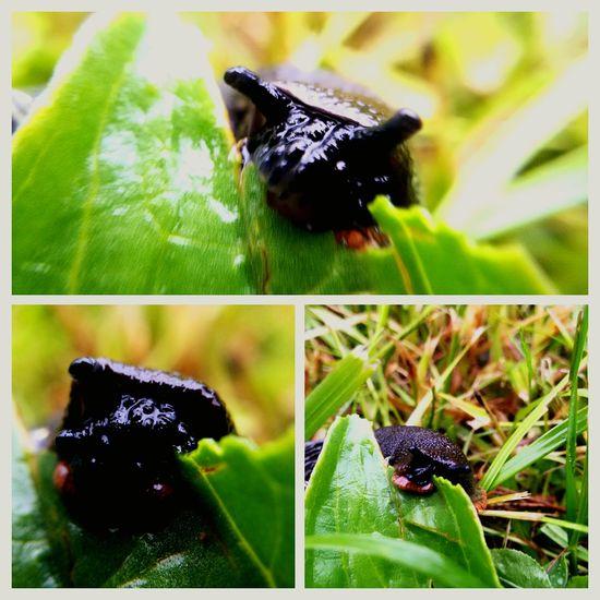 A kto to się w trawie kryje? 🐌 ślimak Trawa Mokro Kolaż