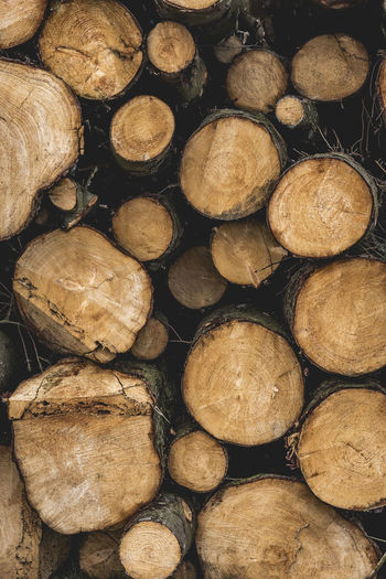Abundance Arrangement Backgrounds Close-up Deforestation Environmental Issues Firewood Forestry Industry Fossil Fuel Fuel And Power Generation Full Frame Global Warming Heap Large Group Of Objects Log Lumber Industry Nature No People Pile Stack Textured  Timber Tree Ring Wood - Material Woodpile