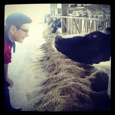 Questa Vacca Vuole Una sfidafacciaafacciaconme