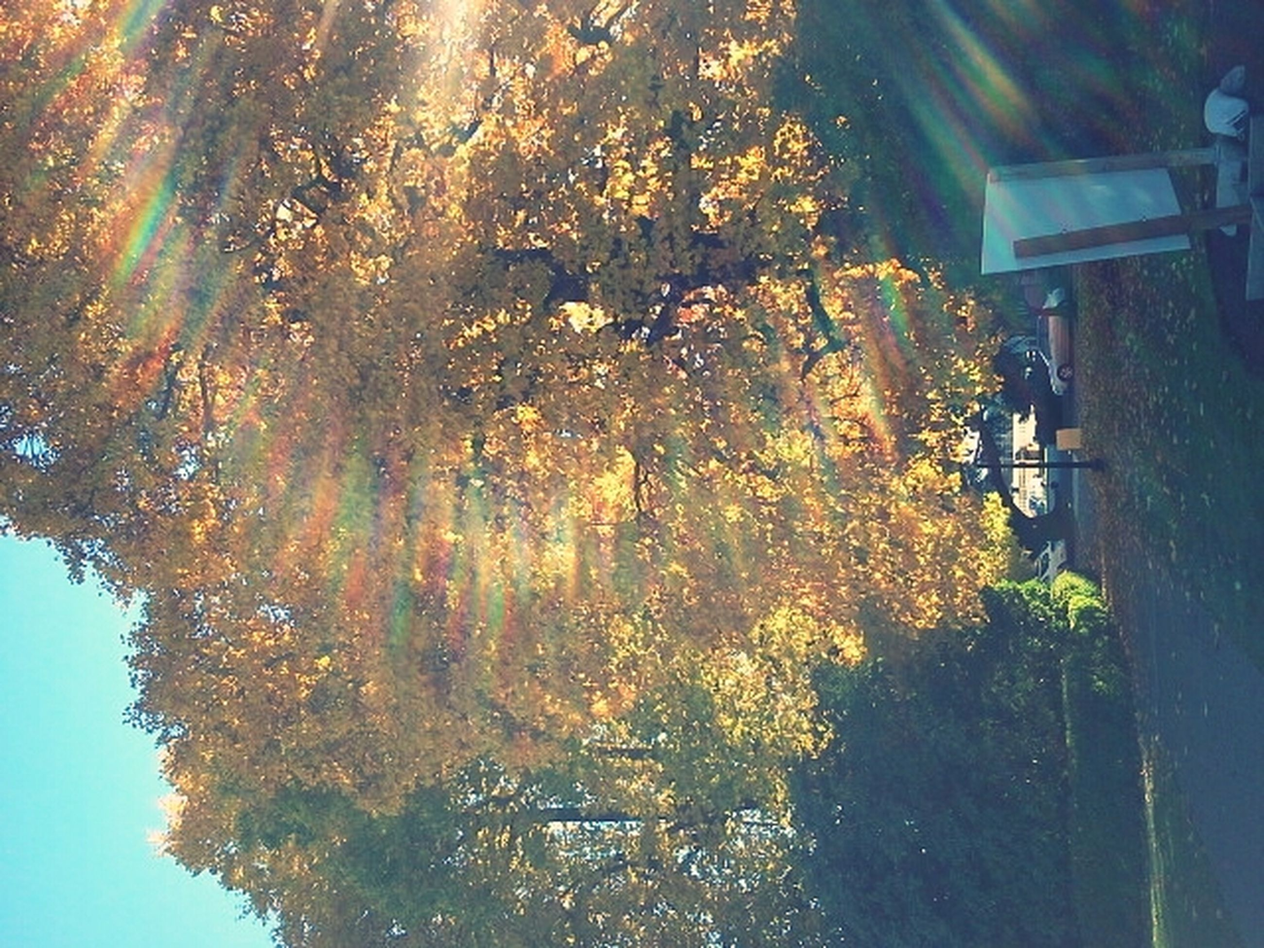 tree, growth, branch, building exterior, sunlight, nature, built structure, beauty in nature, low angle view, architecture, season, tranquility, reflection, outdoors, no people, sky, water, autumn, house, leaf